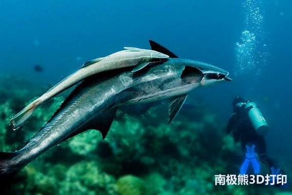 壁纸 动物 海底 海底世界 海洋馆 水族馆 鱼 鱼类 570_380